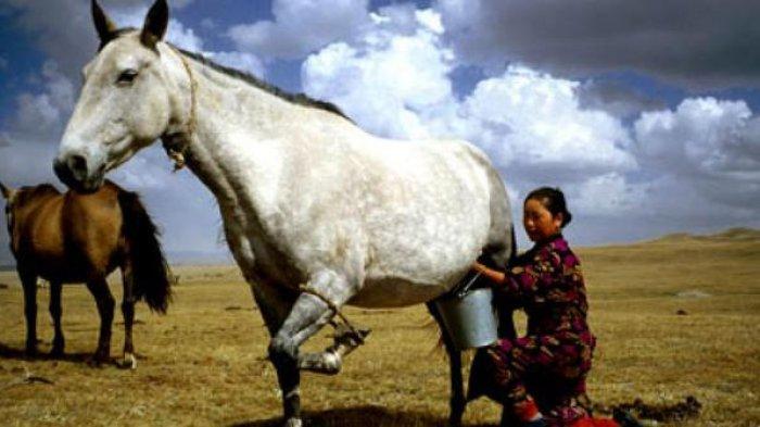 5 Alasan Kenapa Susu Kuda Liar Lebih Sehat Daripada Susu Sapi Biasa